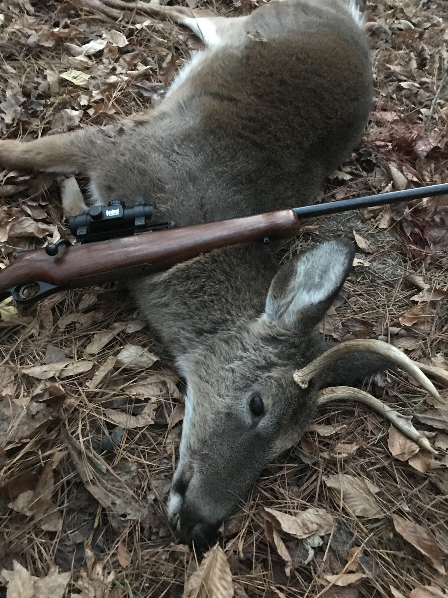 410 Slugs and Buckshot? - Graybeard Outdoors