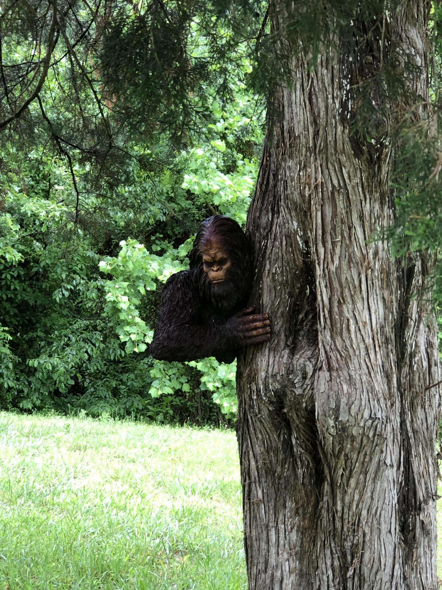 Anybody find Bigfoot yet?-9e6fe88d-fb64-4bcc-a322-248d6806de7d_1557679547029.jpg