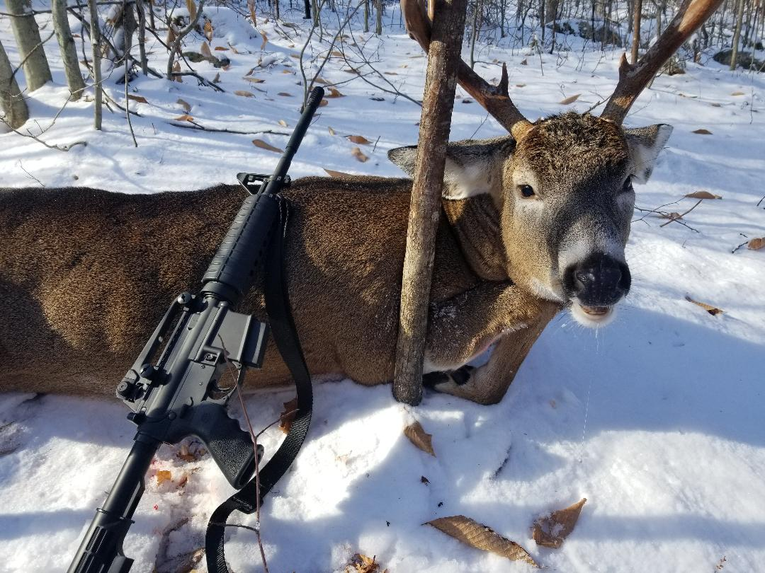 5.56 deer-deer.jpeg
