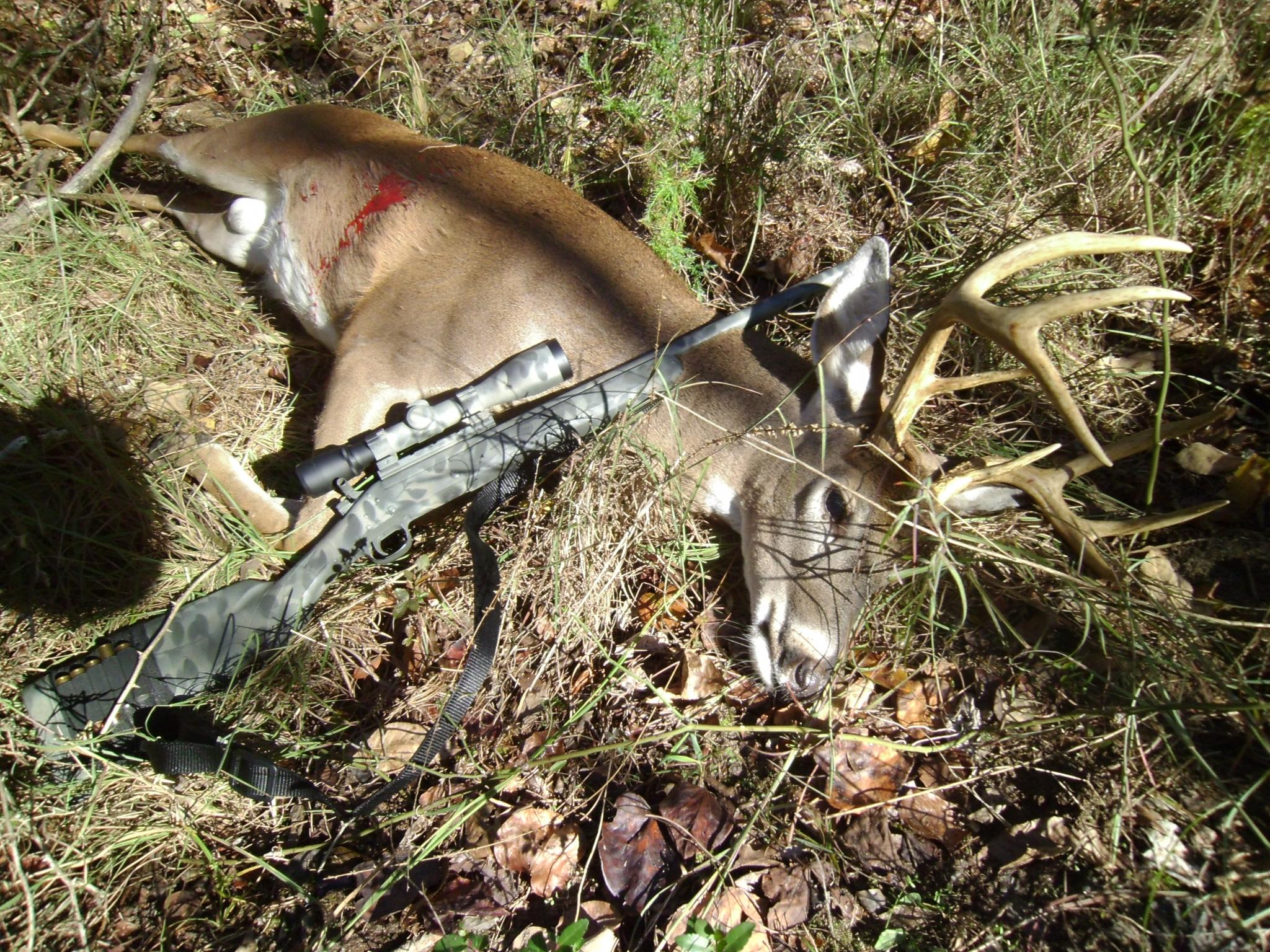 How did everyone's Handi deer season go?-sany0794.jpg